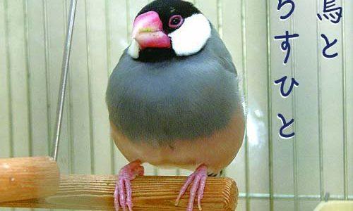 文鳥と暮らすひと(6)寺ピンさん