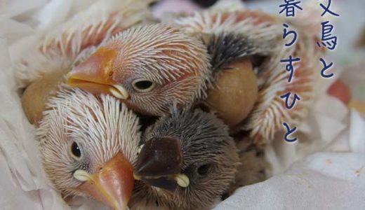 文鳥と暮らすひと(9)ドルミヨさん