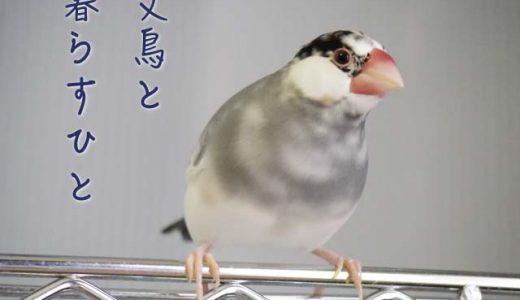 文鳥と暮らすひと(3)ちたはんだやとみさん