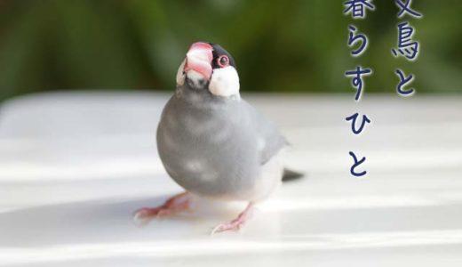 文鳥と暮らすひと(8)伊藤美代子さん